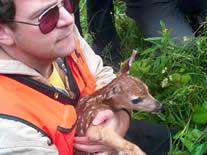 Holding deer